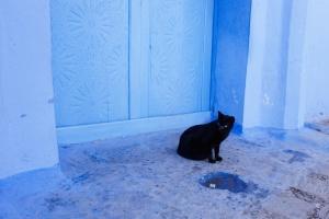 Jedna z mnoha koček v Modrém městě